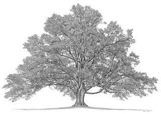 Famtree