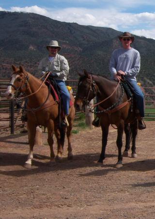 Skipper - dave horses