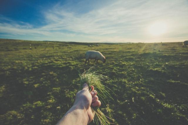 Handful-grass-fields-meadow-ants